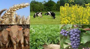 Projet de loi agriculture et alimentation : la grande désillusion !