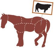 Fraudes à la viande de cheval – Le procès s'ouvre enfin