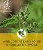 Risque saisonnier d'allergie au pollen d'ambroisie